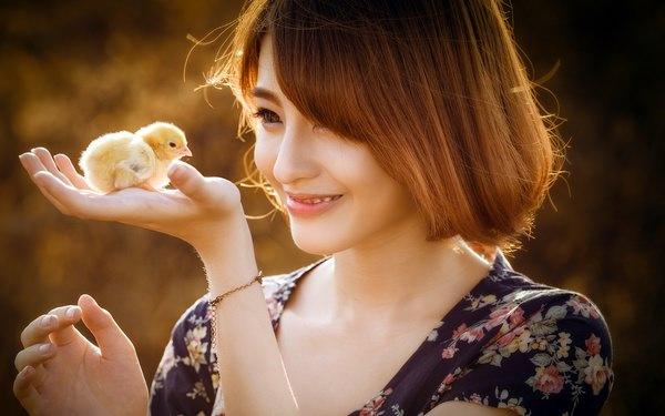 К чему снятся цыплята: радоваться или опасаться?