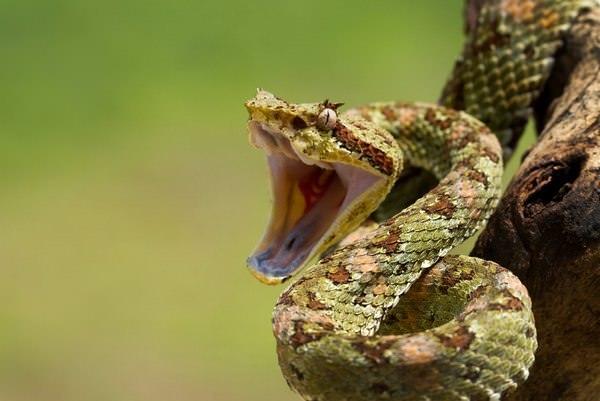 К чему снится укус змеи: сонник, в руку, что значит в ногу, хотела ...