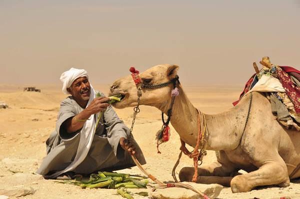 К чему снится верблюд: подробное толкование