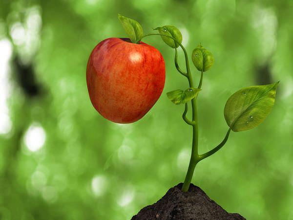 К чему снятся яблоки: развернутое толкование