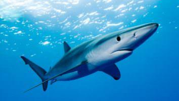 видеть во сне акулу