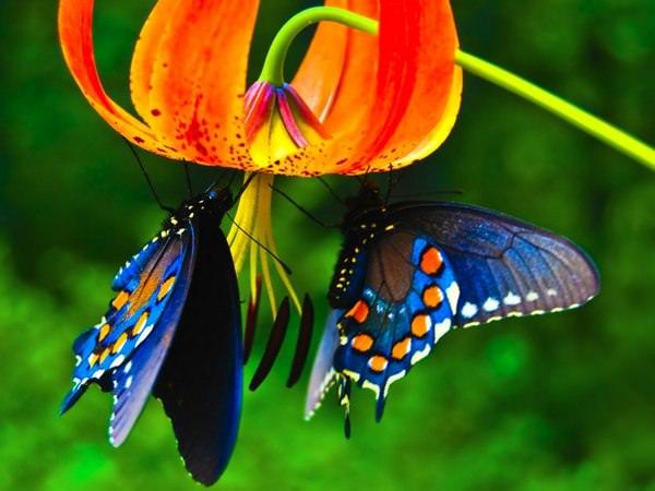 бабочки во сне