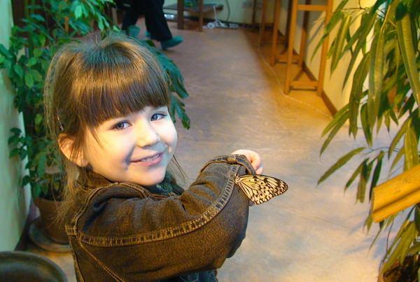 Бабочки во сне: к чему грезятся прекрасные насекомые?