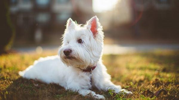 К чему снится белая собака женщине фото