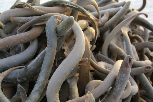к чему снятся белые черви
