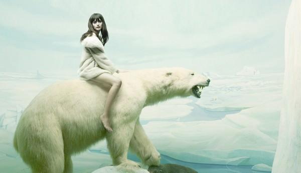 К чему снится белый медведь: значения сновидения