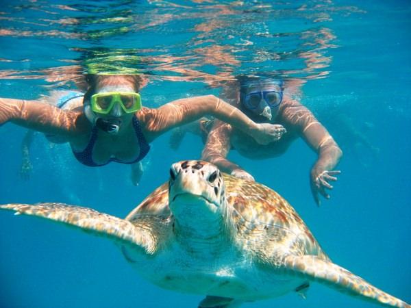 К чему снится черепаха: жизнь требует ускорения?
