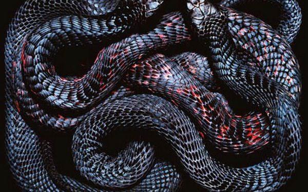 Видеть во сне серую змею фото