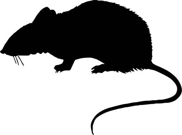К чему снятся дохлые мыши: толкования «противного» сна