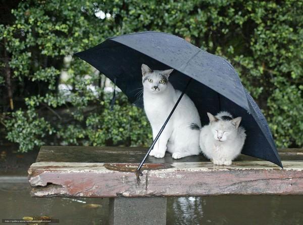 Сонник миллера под дождем