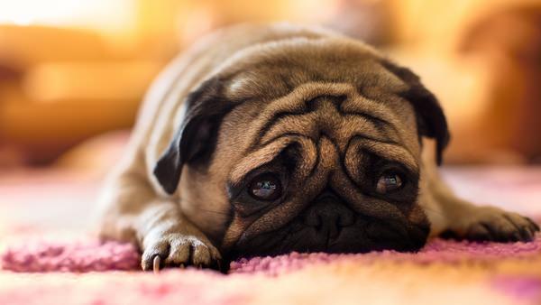 К чему снятся клещи: толкование неприятного сна