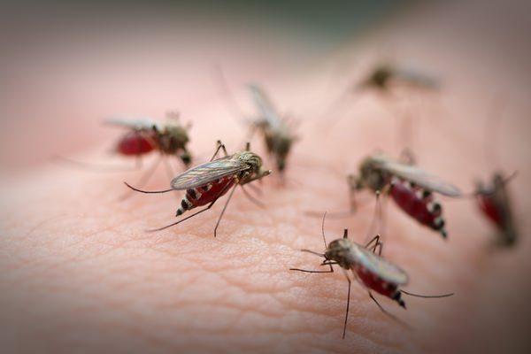 К чему снятся комары: подробное толкование сновидения
