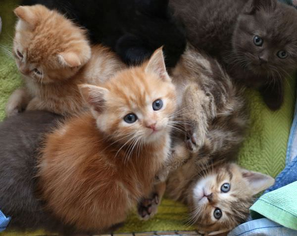К чему снится кошка с котятами: умилиться или насторожиться?