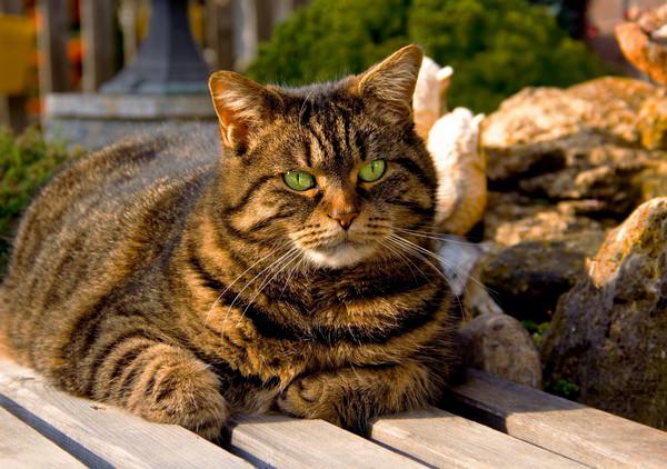 К чему снятся кошки: подробное толкование сна об этом красивом животном
