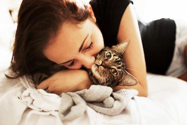 К чему снится кот: значения в сонниках