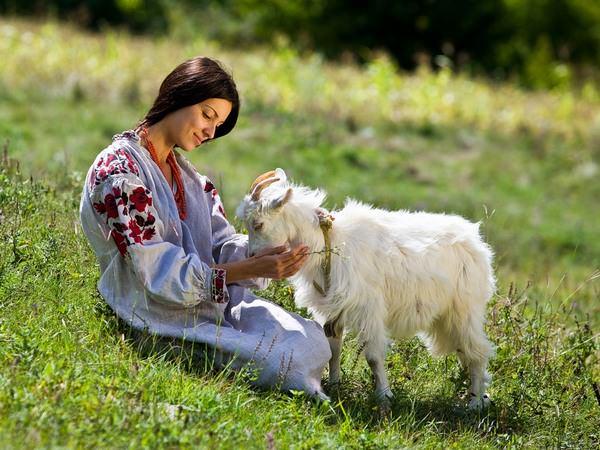 К чему снится коза: толкования странного сна