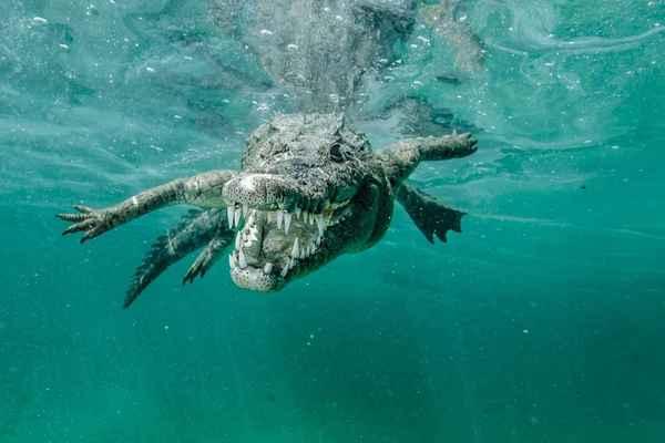 К чему снится крокодил: толкование страшного сна