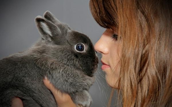 К чему снятся кролики: подробное толкование сновидения