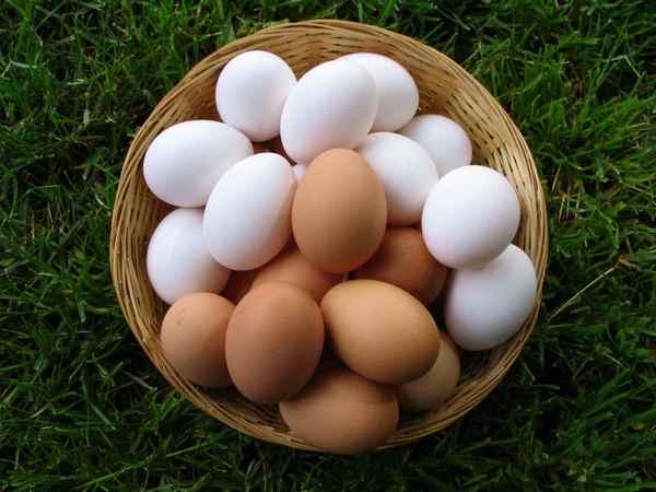К чему снятся куриные яйца: значения и толкования деталей