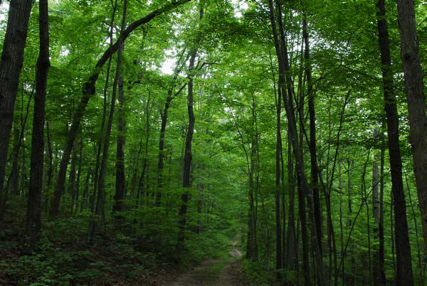 к чему снится лес