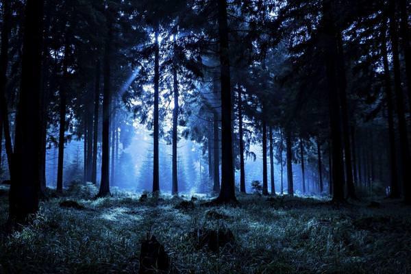 К чему снится лес: подробности и значения