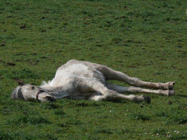 К чему снится лошадь: предстоит верховая прогулка?