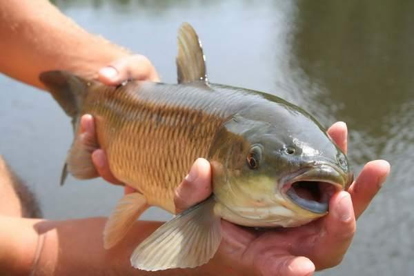 К чему снится ловить рыбу руками: сонник, женщине, мужчине ...