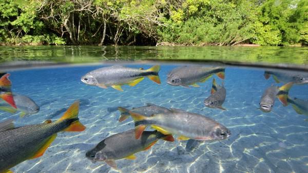 Сон река с рыбой