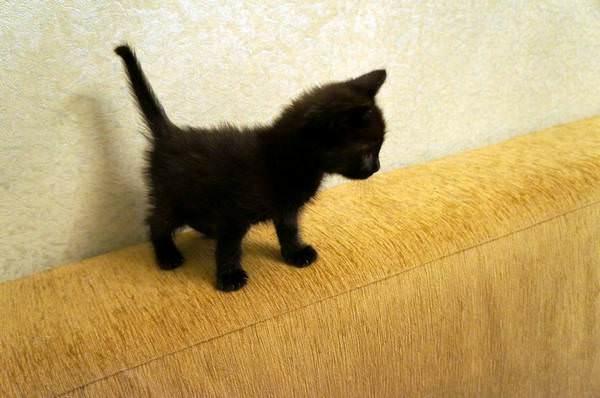 Маленький кот в домашних условиях