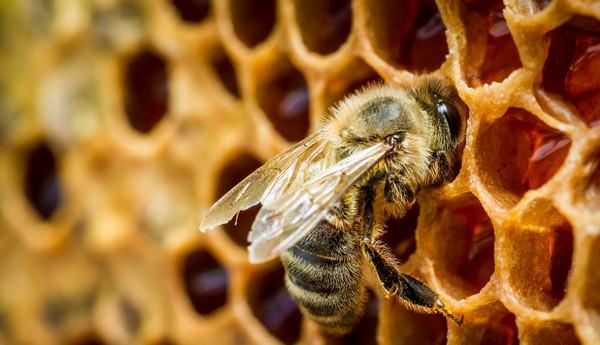 к сот собирать из мед снится чему