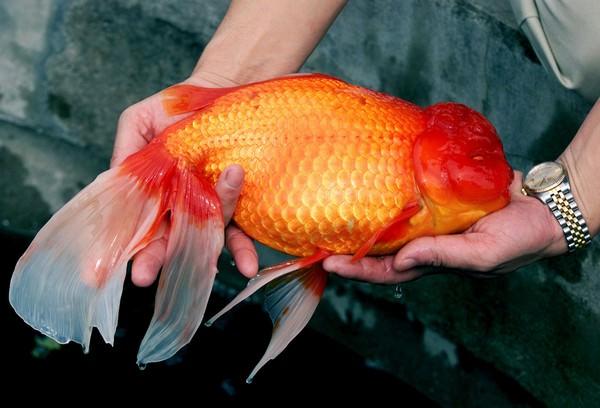К чему снится рыба беременна 842