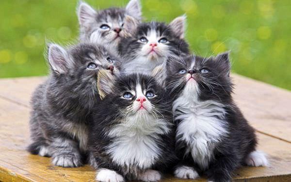 К чему снится много кошек: грядут положительные изменения в жизни?