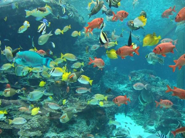 Сонник мелкая рыба в чистой воде