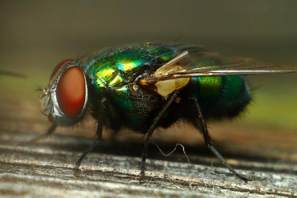 Во сне быть мухи