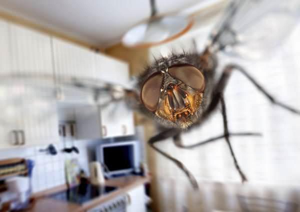 К чему снятся мухи: значения в сонниках