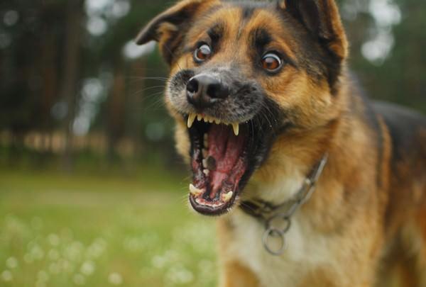 к чему снится собака, которая кусает