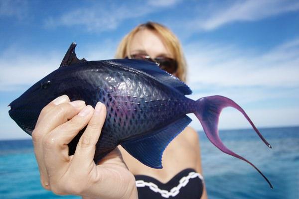 К чему снится рыба беременна 614