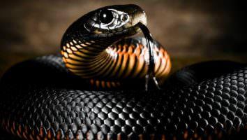 убить змею во сне
