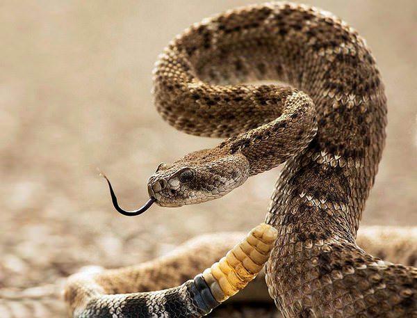 Убить змею во сне: к чему такое снится?