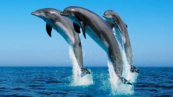 к чему снится дельфин