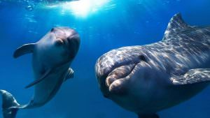 Левченко к чему приснился дельфин женщине свежими