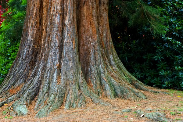 К чему снится дерево: радость или печаль?